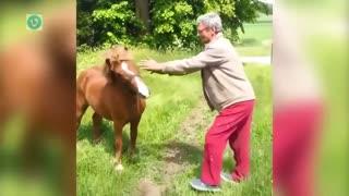 FUNNY INSTANT REGRET HORSE GRABBING
