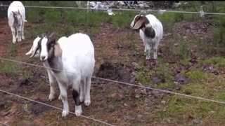 Animals Getting Shocked w/ Sound Effects