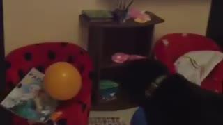 LMAO! My dog plays with a balloon.