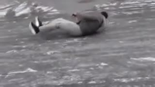 Green jacket slides across ice road falls hits head
