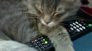 Cat adorably cuddles remote control during nap