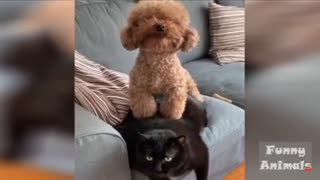 Funny animals video reactions
