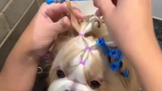 cutie dog in a house