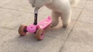 Scooter master