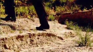 Stolen Voices, Buried Secrets: Steven Wood