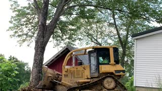 Pushing Trees out with the CAT D5 High Track