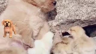Cute little dog adorable duck moment