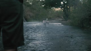 Dog catches a ball in river