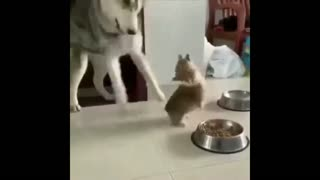 A bound dog plays with his little puppy in a provocative manner