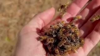 BEE'S QUEEN BALLING