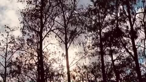 Heart in Trees | All Set