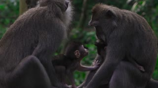 Adorable Baby Monkeys With Parents