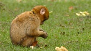 Baby monkey eating Bread | Cute animals