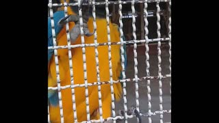Parrot in nature compiled clips