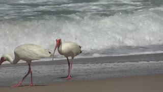 The most beautiful shot of the moment beach birds eat