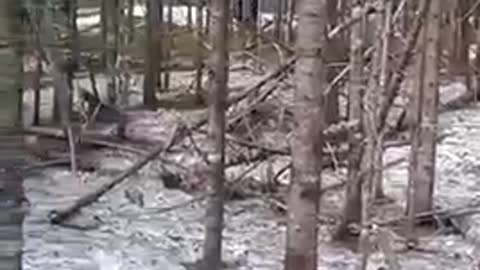 Hiking family caught singing