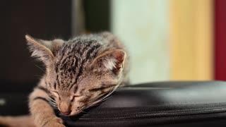 A Lovely Sleepy Cat