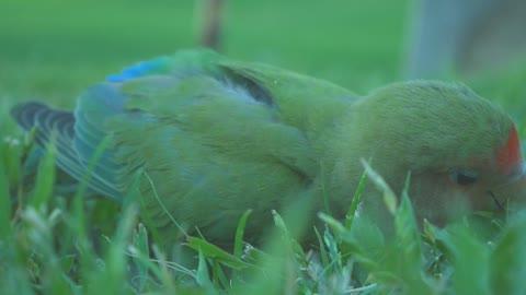 A bird eating