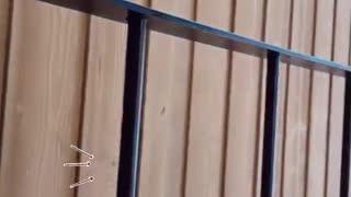 Catherine Peach Vidéo 2