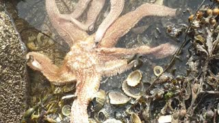 A close encounter with starfish in Scotland