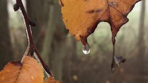When the Tear... Drops!