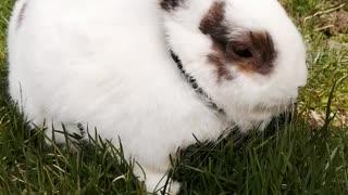 Chuck Bunny...13