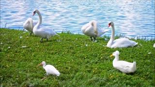 birds Beautiful Golden