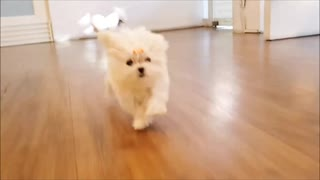 Play around with puppy
