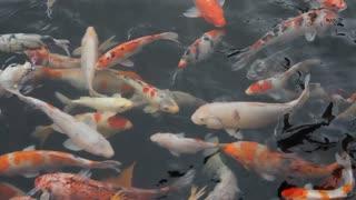 Beautiful fish 202