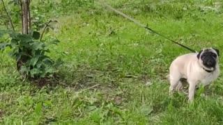 Funny dog got restricted