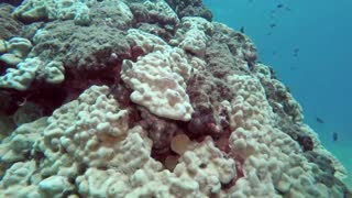 Attack and predation ..! Octopus narrowly escaping from inside the eel's den- HD video - 3