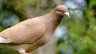 Lovely Dove