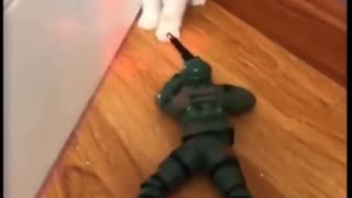 The cat almost died