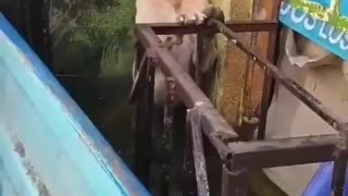 Frightened Dog is Rescued From Flooded Area