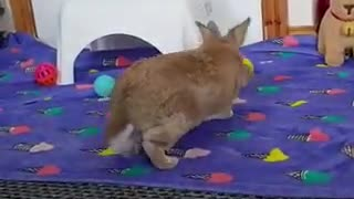A video that's sure to make u smile 🤗🐰😍😊