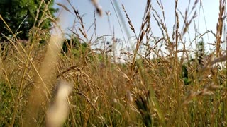 Through the wheat.
