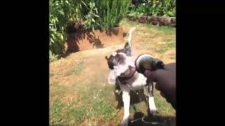 Funny bek dog animals compilation