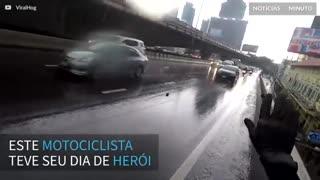 Filhote de gato é resgatado em autoestrada por motociclista