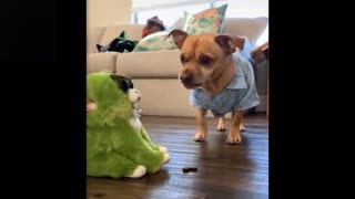 These funny pets are so Crazy! 2021