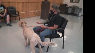 Dog separation anxiety training