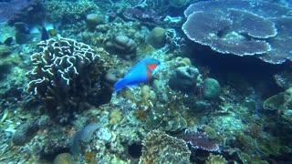 Tioman Diving Trip