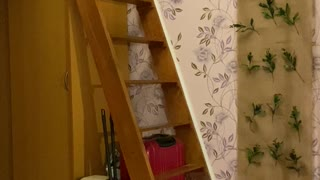 Cat Not-So-Gracefully Descends Stairs
