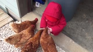 Feeding Baby Chickens.