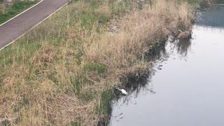 a Crane in small stream