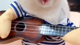 Cat Plays the guitar