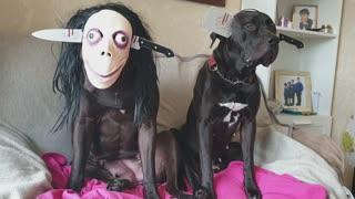 Doggos Scary Halloween Dress Up