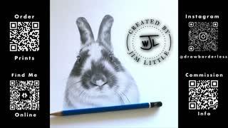 Rabbit pencil drawing time lapse