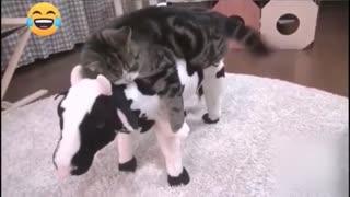Pets having Fun