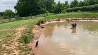 Three legged dachshund swims alone for first time