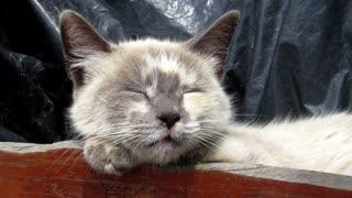 (Tiny) Cat trying sleeping
